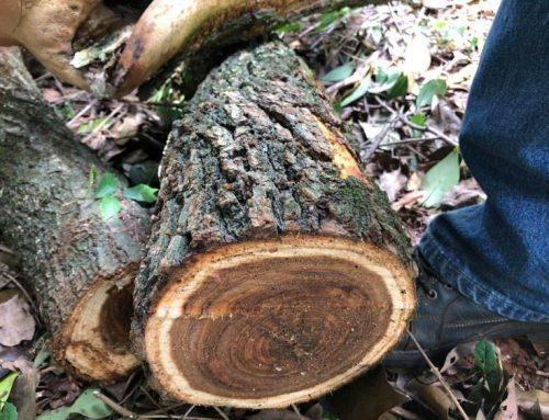Wood Alert